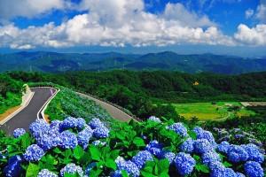 四国の梅雨
